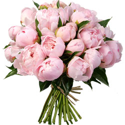 Bouquet de pivoines roses
