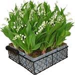 livraison de fleurs envoyez un superbe bouquet d s 22. Black Bedroom Furniture Sets. Home Design Ideas